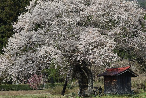 ふるさとの春