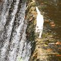 Photos: 猫の川渡り