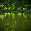 Photos: 大池の緑