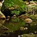Photos: 翡翠の棲む川
