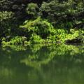 Photos: 北山池