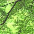 Photos: 緑の景色