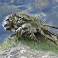 Photos: 蟹