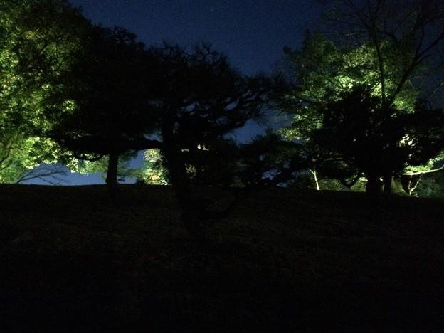 チームラボ広島城光の祭 入場前2