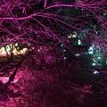 チームラボ広島城光の祭20