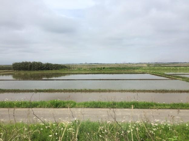 Photos: 成田線からの田園風景1
