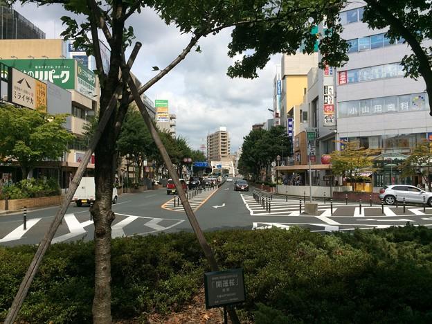盛岡駅13 ~開運桜~