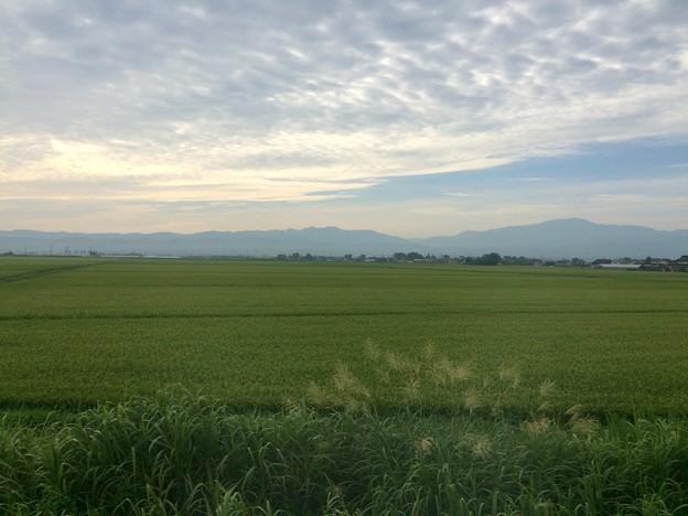 庄内平野 車窓風景1