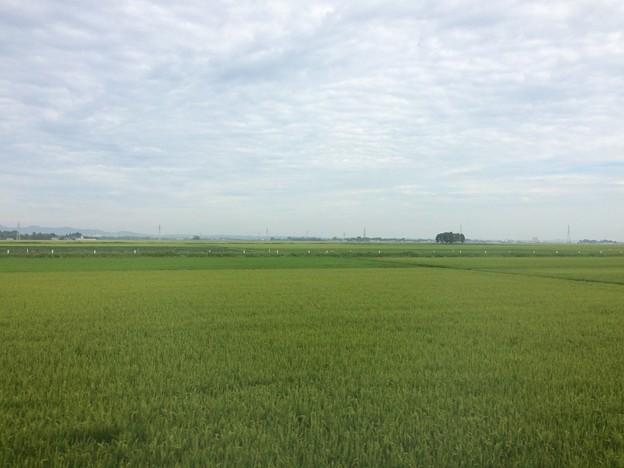 庄内平野 車窓風景2