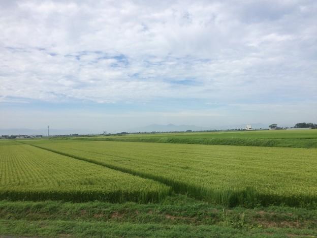 庄内平野 車窓風景3