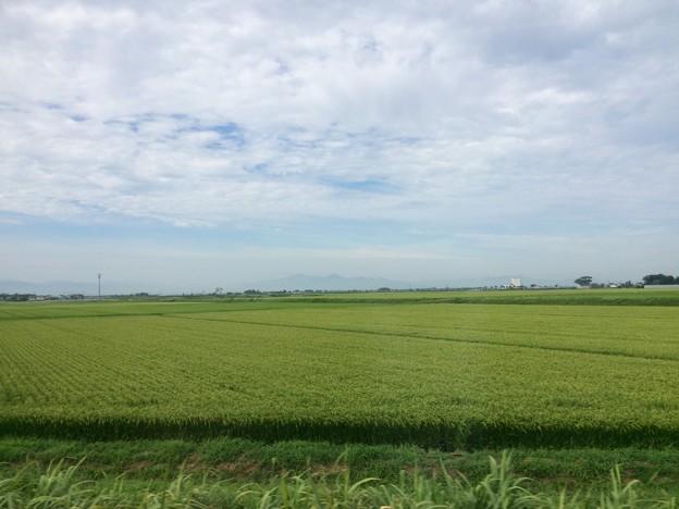 庄内平野 車窓風景4