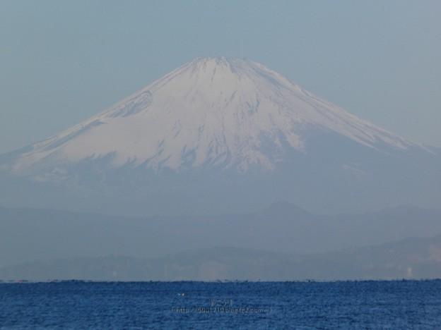 210228-富士山@長者ヶ崎 (14)