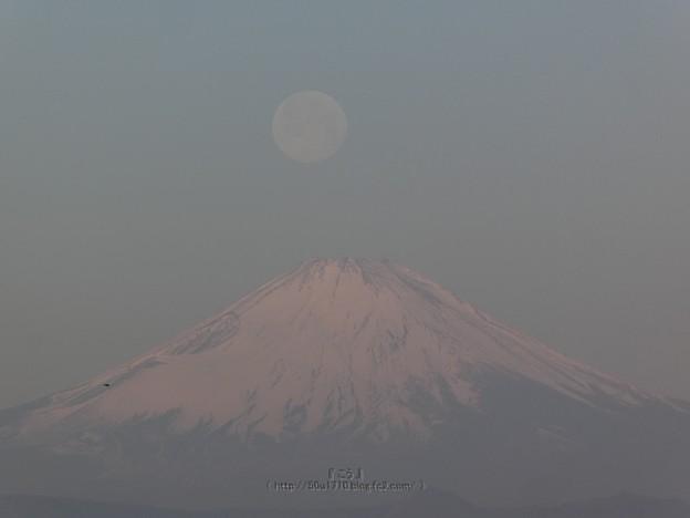210228-パール富士 (31)