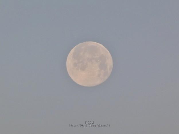 210228-パール富士 (5)