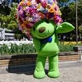 210409-ガーデンベアグリーティング@横浜公園 (114)