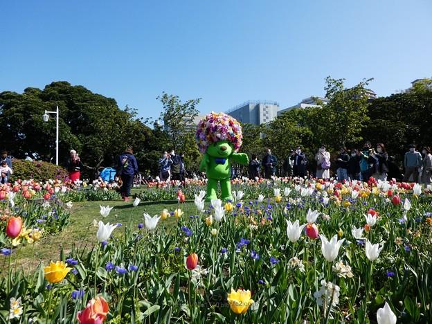 210410-ガーデンベアグリーティング@山下公園 (1)