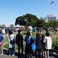 210410-ガーデンベアグリーティング@山下公園 (14)