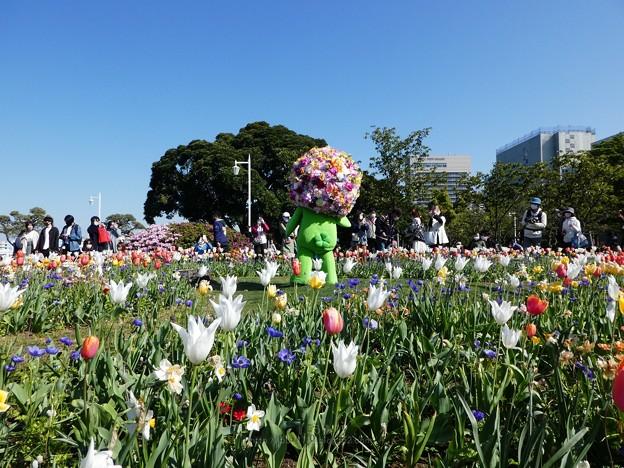 210410-ガーデンベアグリーティング@山下公園 (91)
