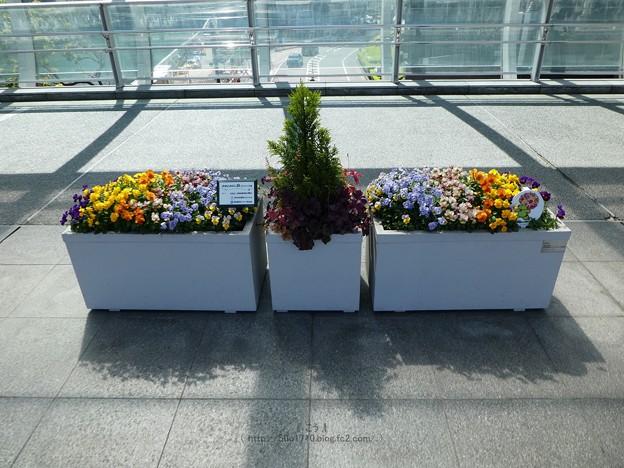 210410-ガーデンベアフォトスポット@横浜駅東口 (1)