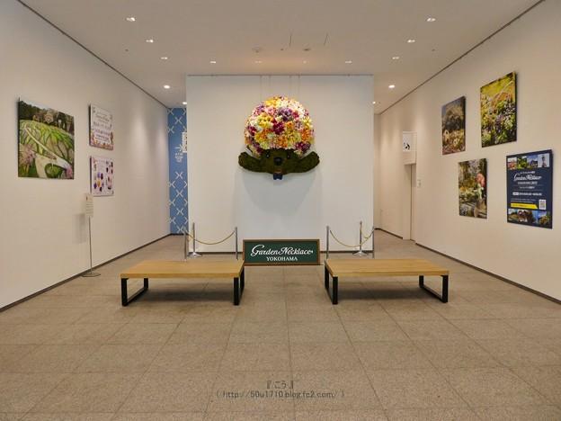 210422-ガーデンベアフォトスポット@横浜市役所1階 (1)