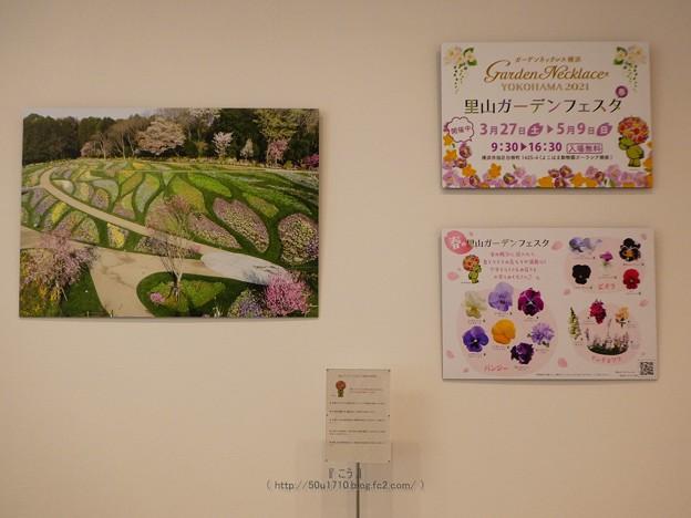 210422-ガーデンベアフォトスポット@横浜市役所1階 (4)