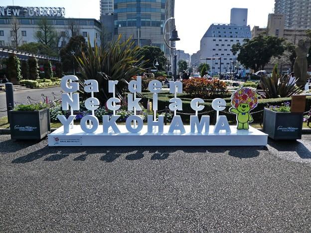 210326-ガーデンベアフォトスポット@山下公園 (2)