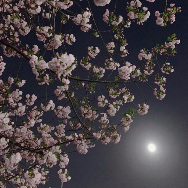 満月の夜に