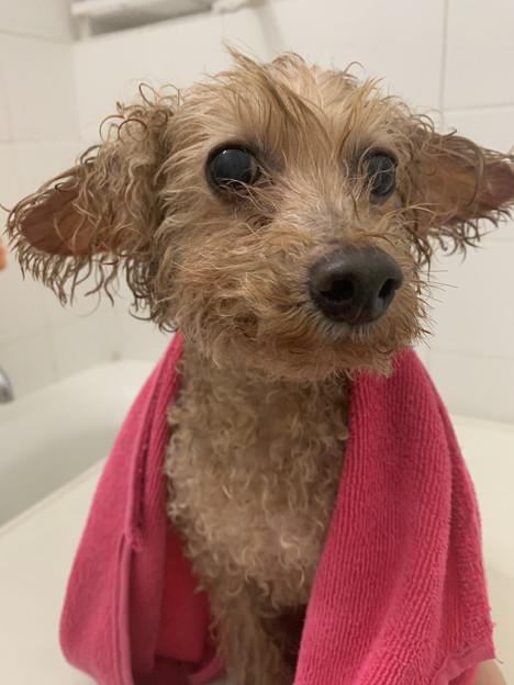 風呂上がり