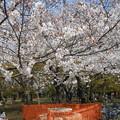 Photos: 公園内ベンチ使用禁止
