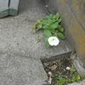 こんなところにこんな花4小