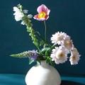Photos: ポット苗を切り花に