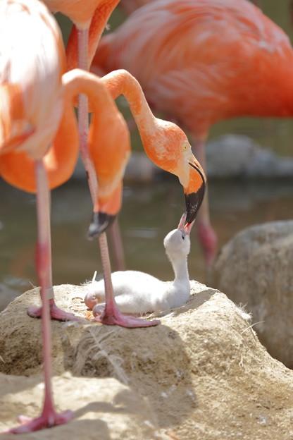 神戸市立王子動物園24