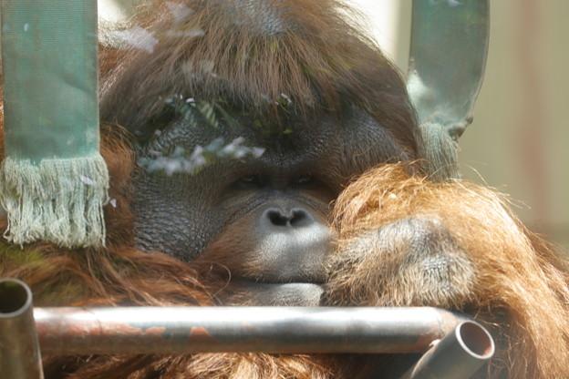 神戸市立王子動物園16