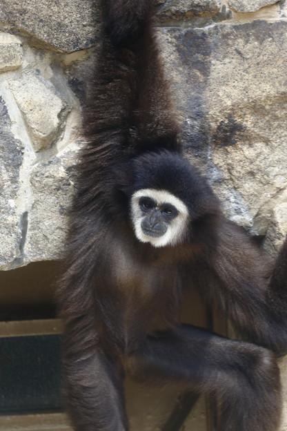 神戸市立王子動物園15