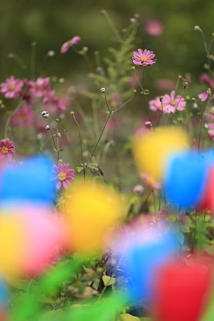 大阪・花の文化園08