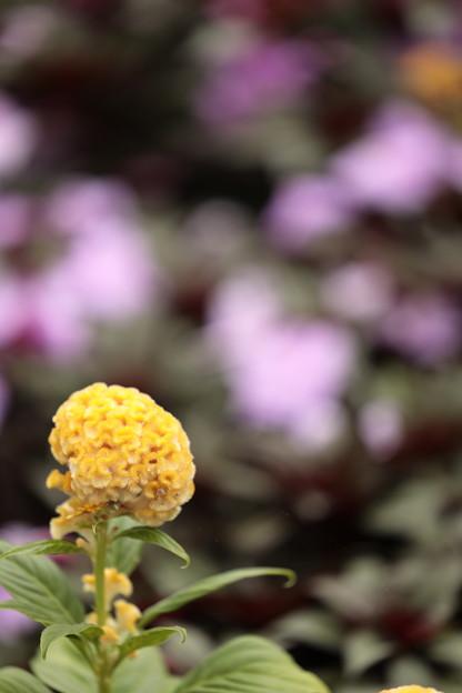 大阪・花の文化園04