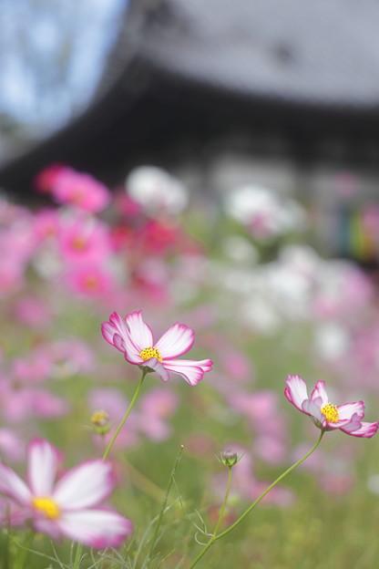 奈良・般若寺11