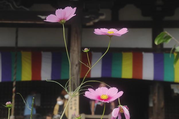奈良・般若寺09