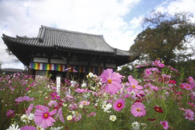 奈良・般若寺03