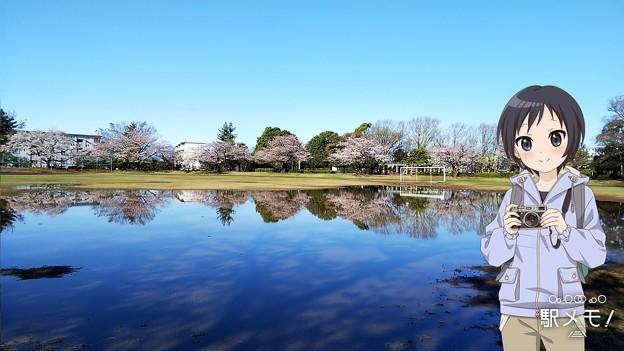 公園の水溜まり