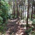 Photos: 金比羅山