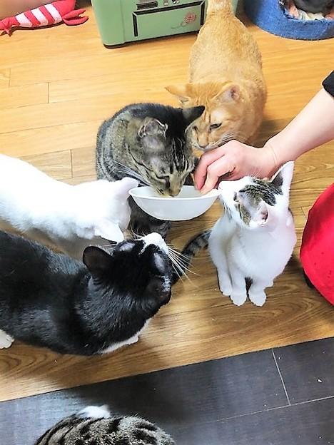 Photos: リしらかば2102243