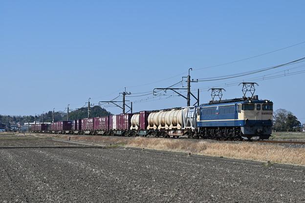 鹿島貨物 (EF652097)