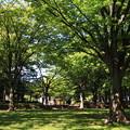平和公園の新緑1