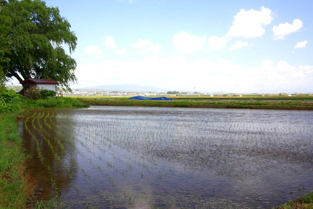 Photos: 田園風景1