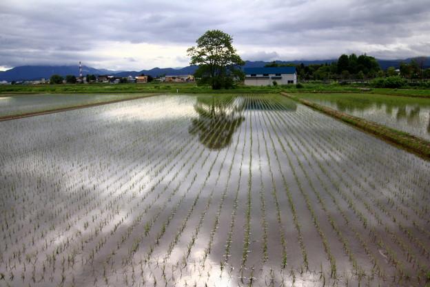 Photos: 田圃