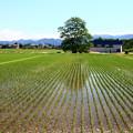 Photos: 田園風景3