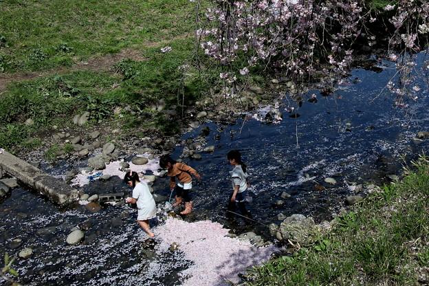 楽しい川遊び 桜咲く東川