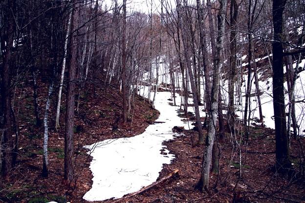 花咲への山道の残雪風景