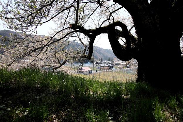 発知 ヒガンザクラ根元からの風景